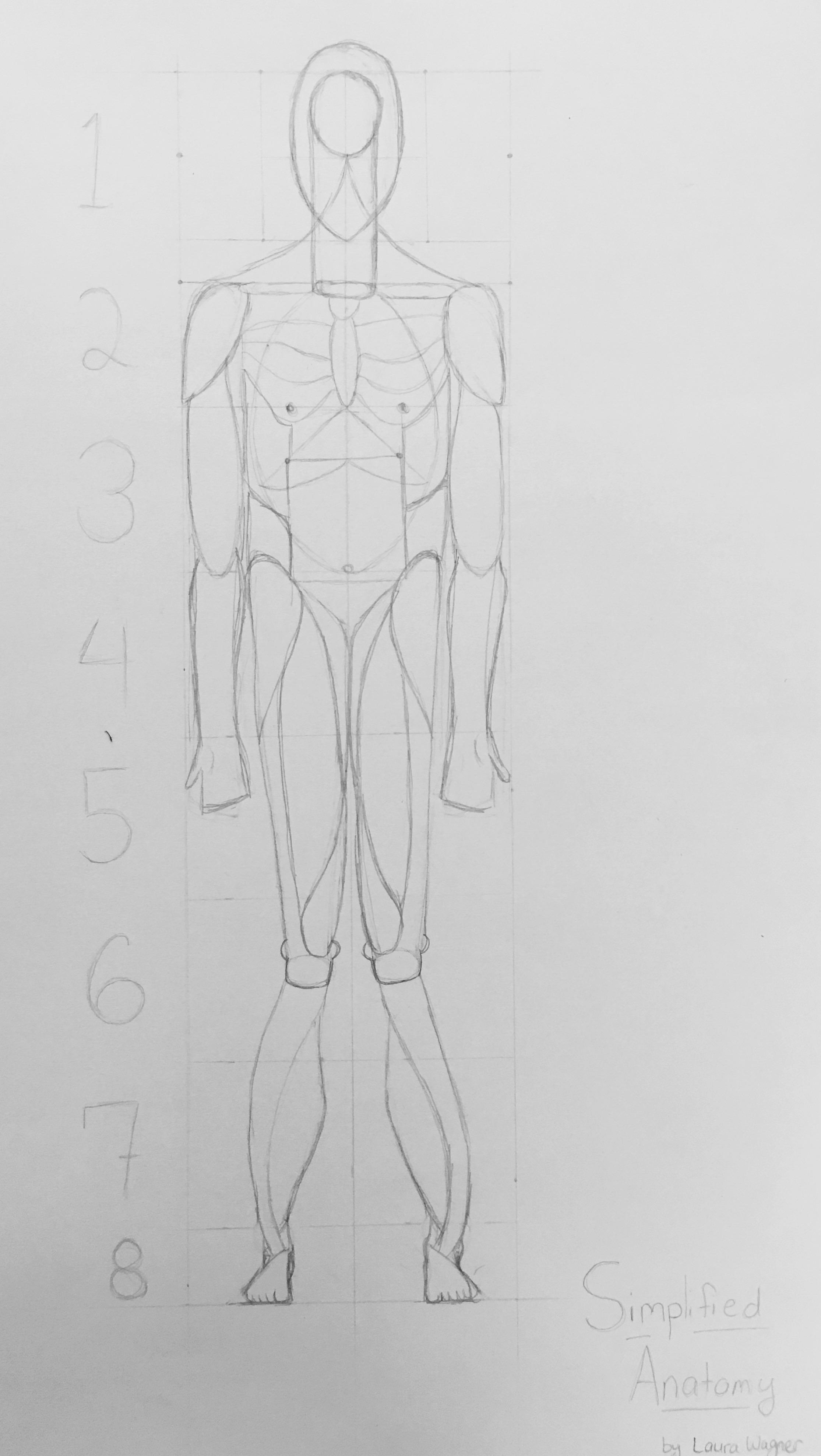 Understanding Human Anatomy Simplified Art With Mr Dexter